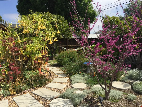 Quiet home for academic or visiting artist Home Rental in San Diego 2 - thumbnail